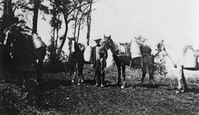 Delivering milk to the NORCO milk factory 1900's EJW photo RTRL